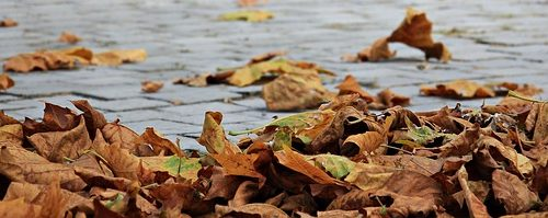 autumn-1685924_640